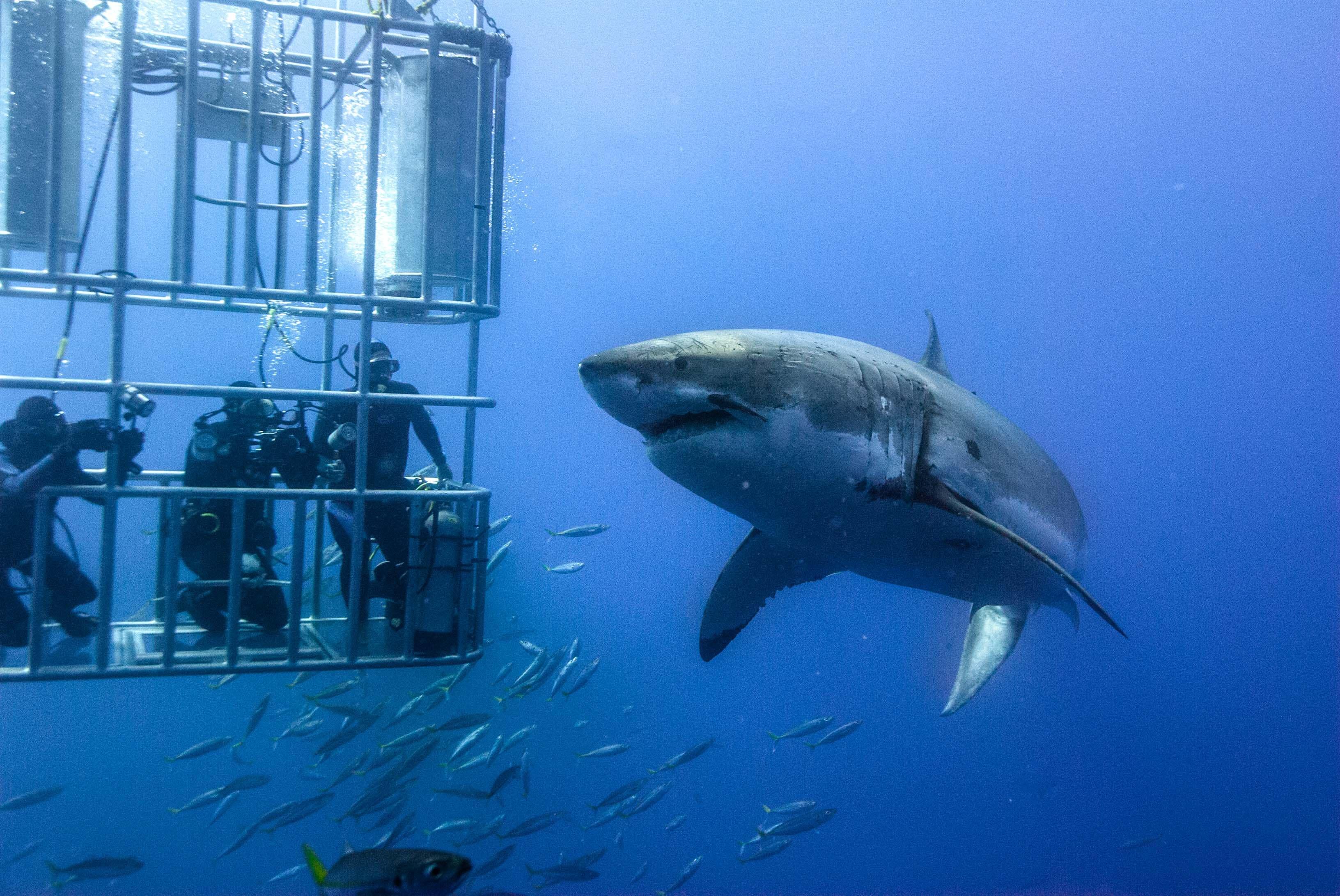 5 Days - White Shark Diving Tour