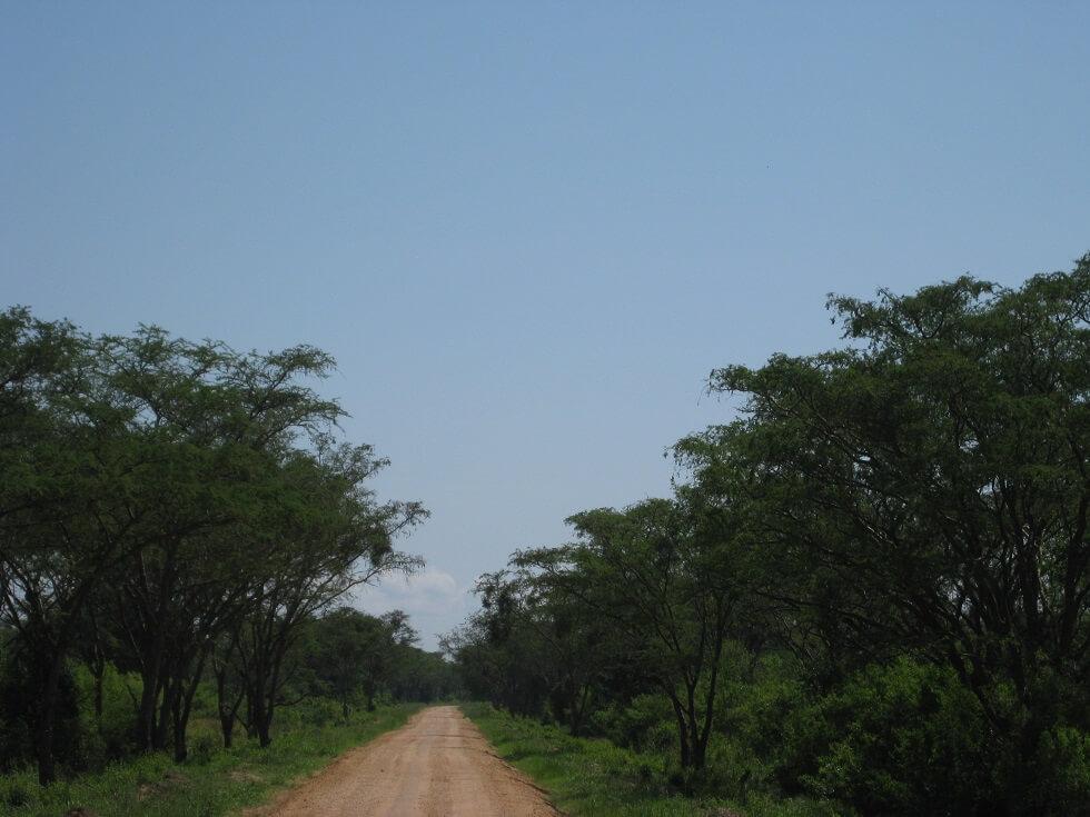 8 Days Uganda Birding Tour