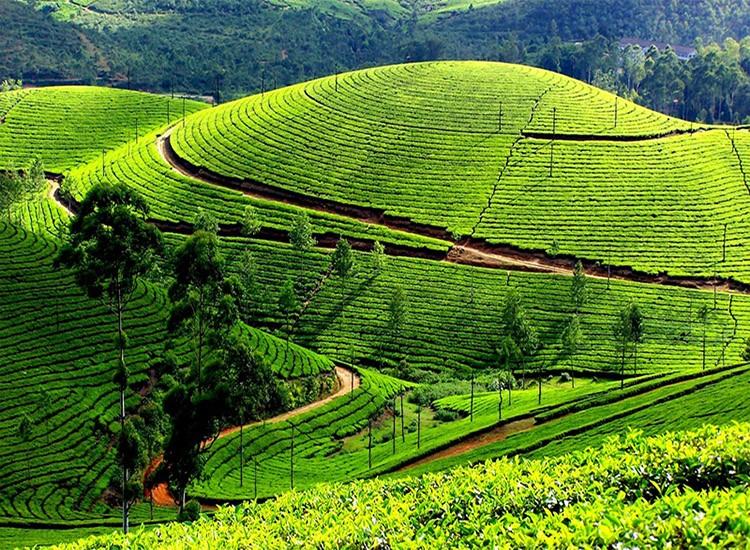 Exotic Kerala - 08 Days