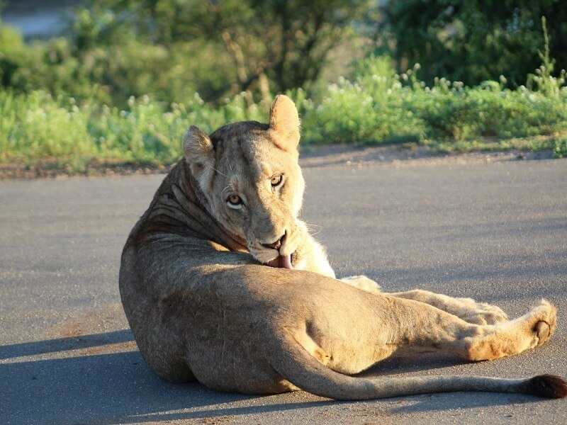12 Days Best of Botswana