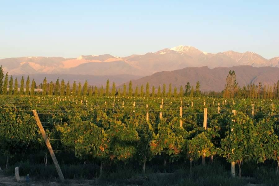 City Tour & Wine Tasting in Mendoza