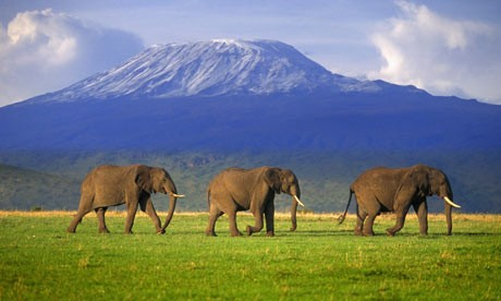 Classical Kenya - Schedule