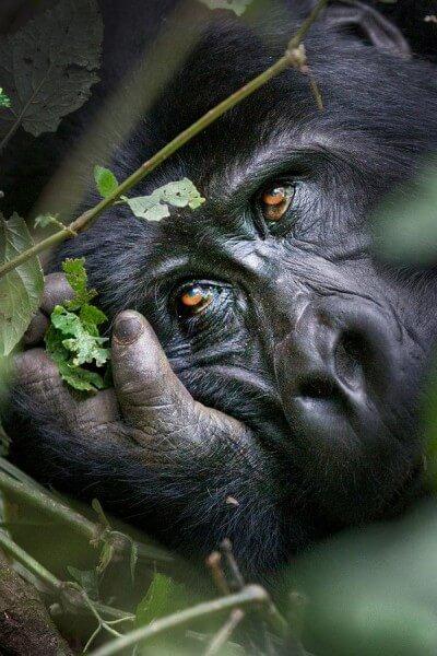4 Days Uganda Gorillas