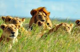 5 days Camping safari