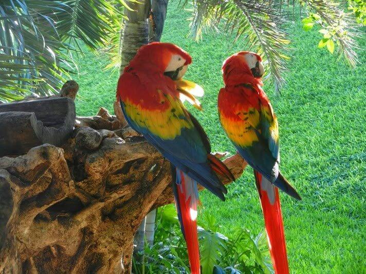 Birding in Puerto Morelos