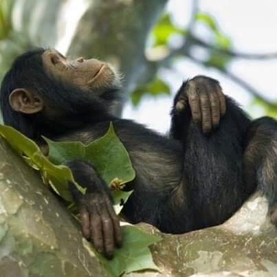 8 Days Uganda Great Apes