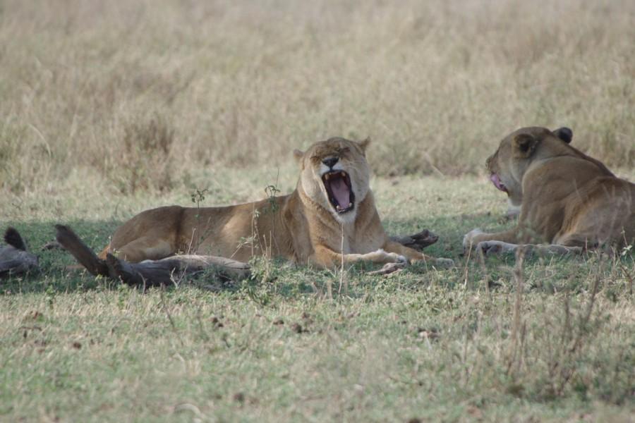 Selous and Zanzibar safari