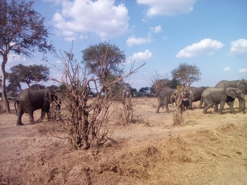 Mikumi and Udzungwa Mountain climbing Safari Budget