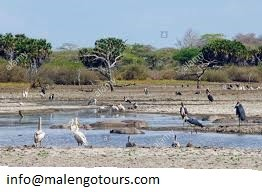 Tanzania Northern Circuit: National Parks