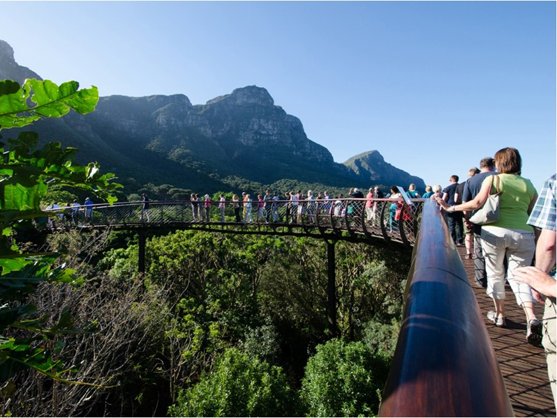 T1: South Africa Safari & Cape Town