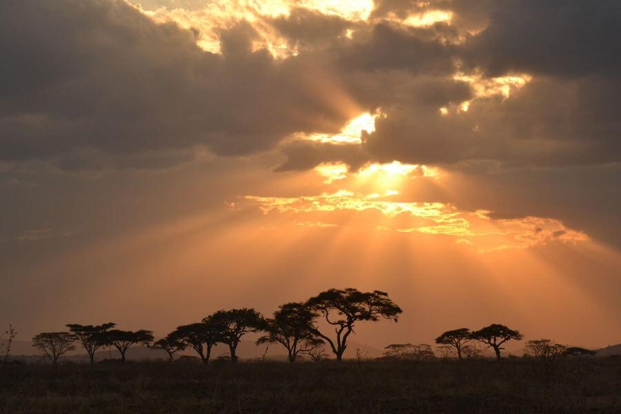 Transfer to Serengetti