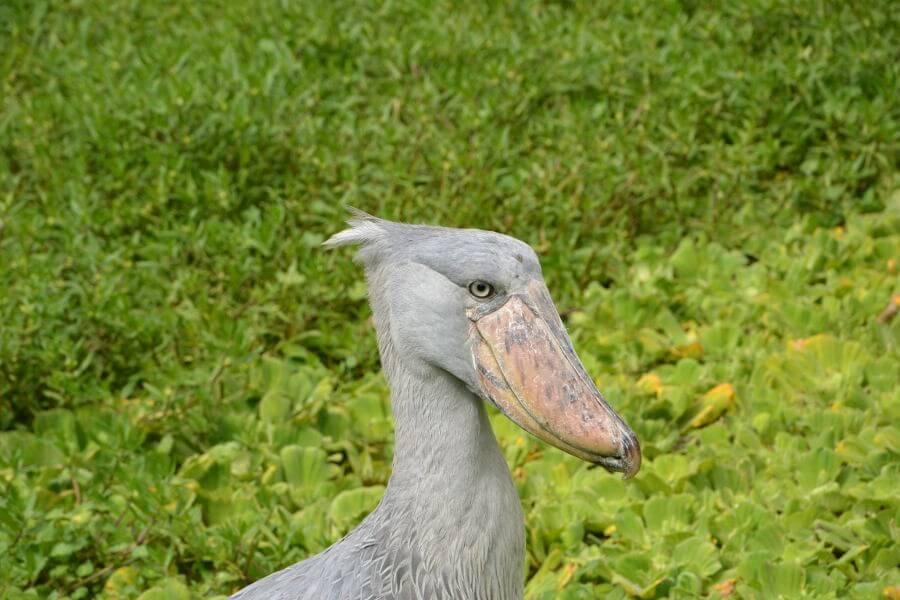 Uganda's birding paradise