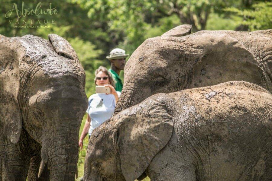7 Days Elephant Galore Safari