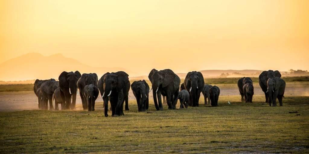 Umani Springs - Amboseli