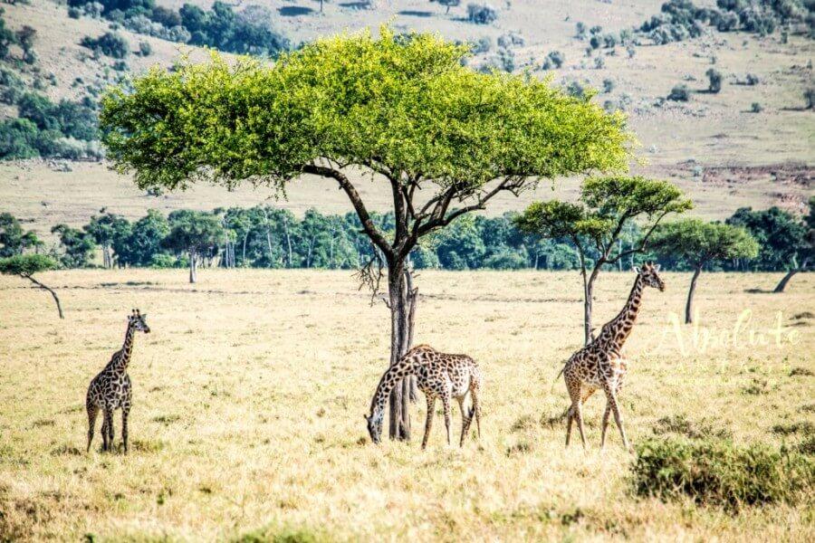4 Days Wings over Maasai Mara Safari