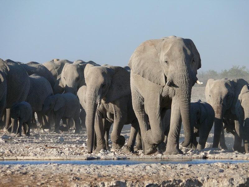 Extended Namibia Safari