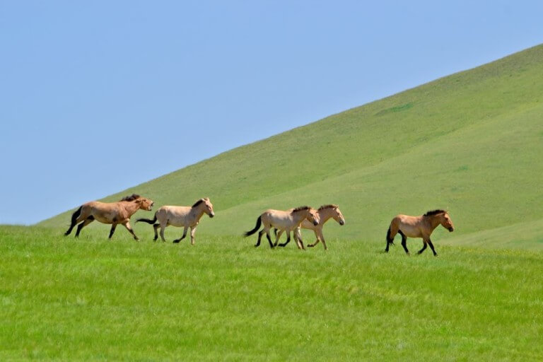 The Silk Road – On the Trail of Nomad Herders