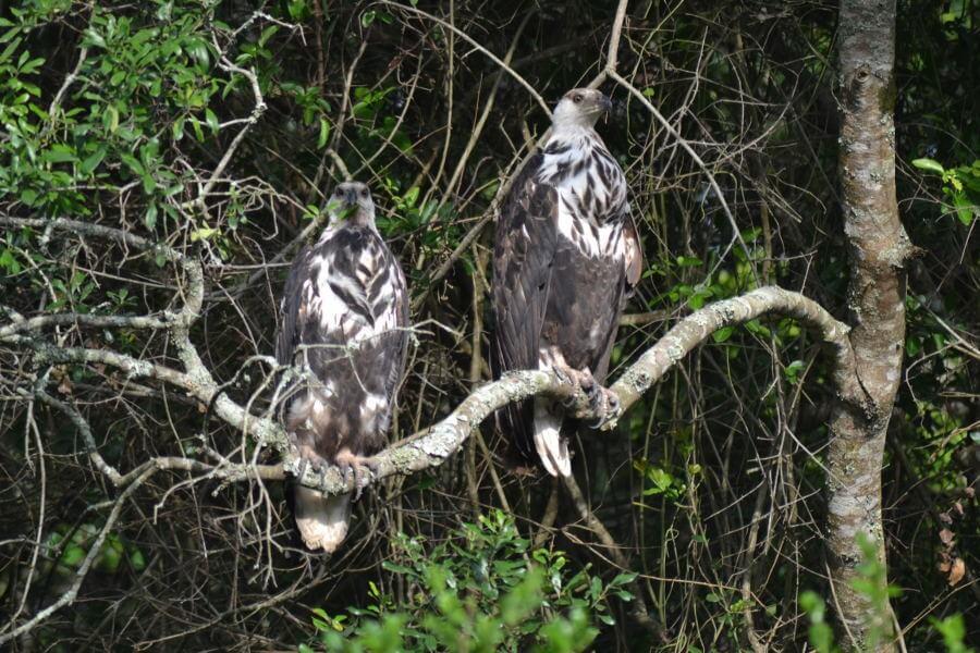 Birding in Ishasha sector