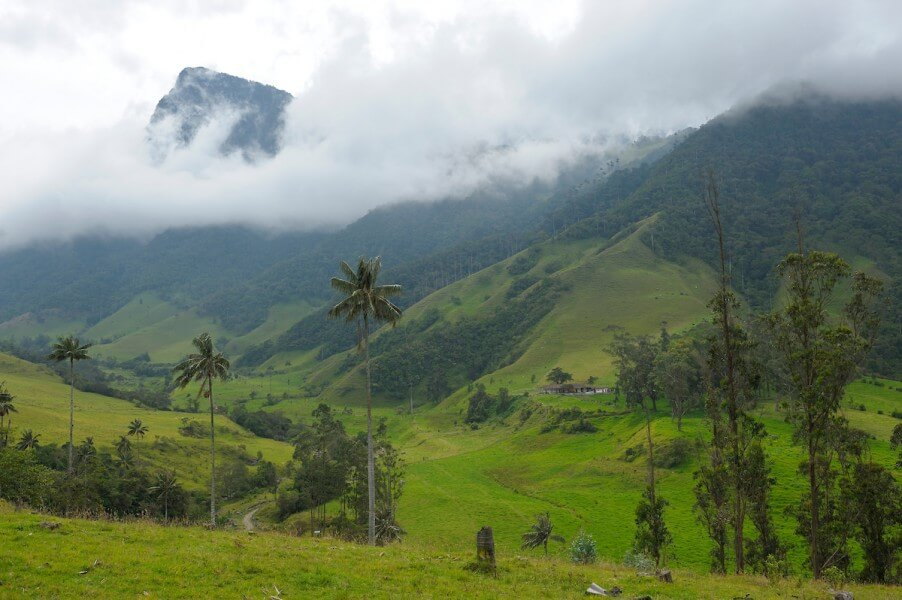 Magnificient Cocora Valley