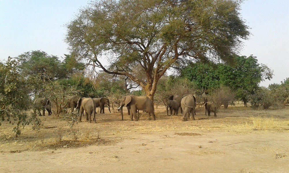 7 Days at Livingstone and South Luangwa, Zambia