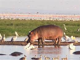 Day 2: Lake Manyara N.P.