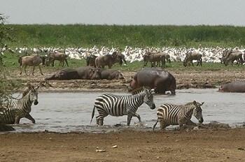 Wildlife + Zanzibar Beach Holiday