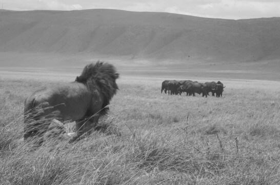 8 Days Migration safari