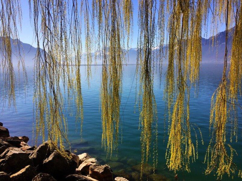 Geneva Lake area