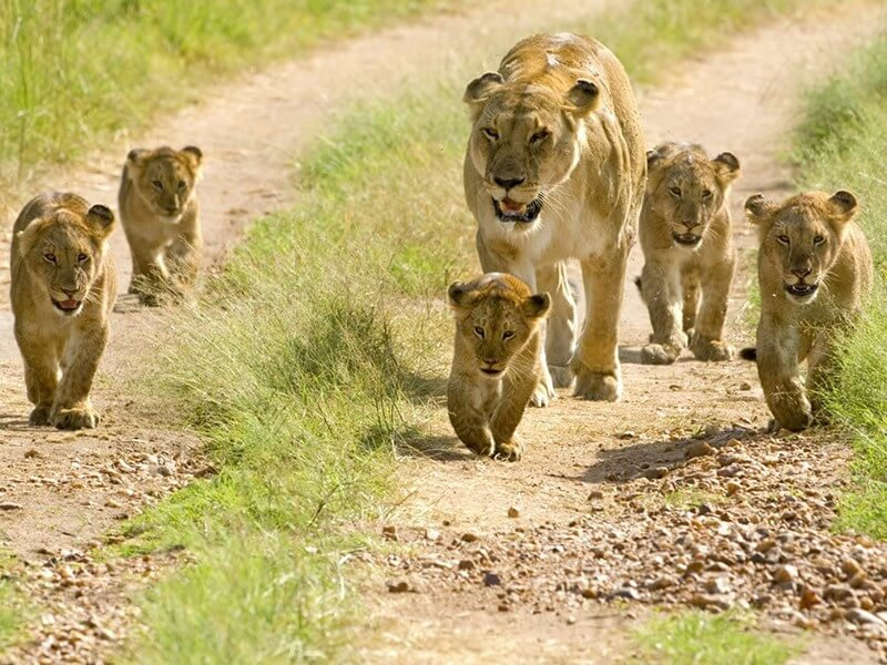 12 Day Great Migration Safari  Serengeti  to Masai Mara