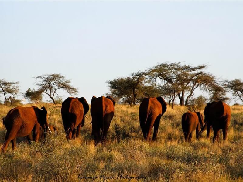 10 Days Classic Kenya Safari