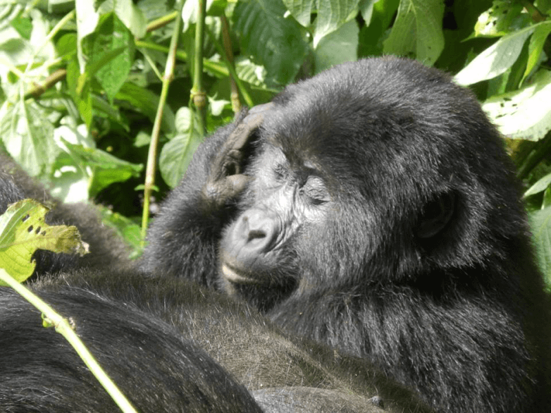 Gorillas and Savanna Safari – 7 days