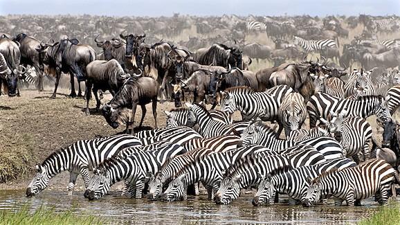 Day 4: Serengeti National Pa