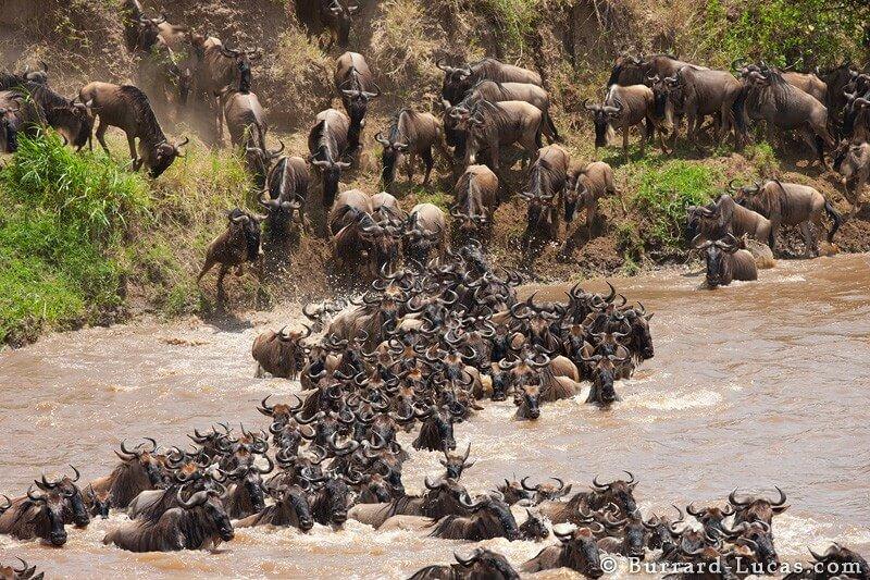 Great Migration Mara River Crossing