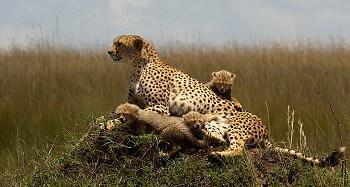 Day 2: Lake Nakuru - Lake Naivasha - Masai Mara