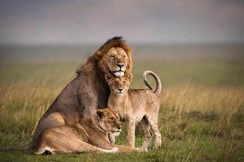 Best of Tanzania & Kenya