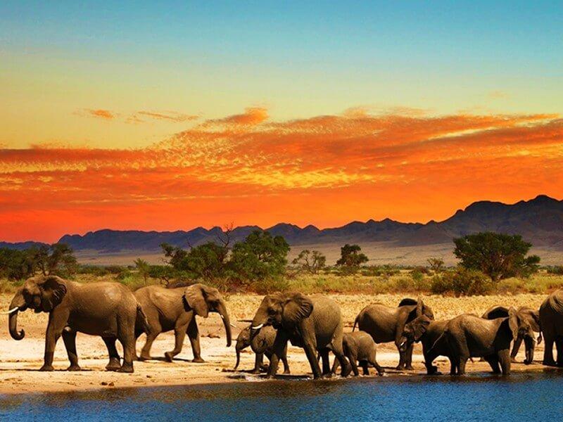 14 Days Kenya Tanzania Big 5 and Rwanda Gorillas