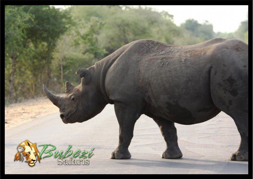 4-Day Bubezi Classic Safari & Panoramic Tour