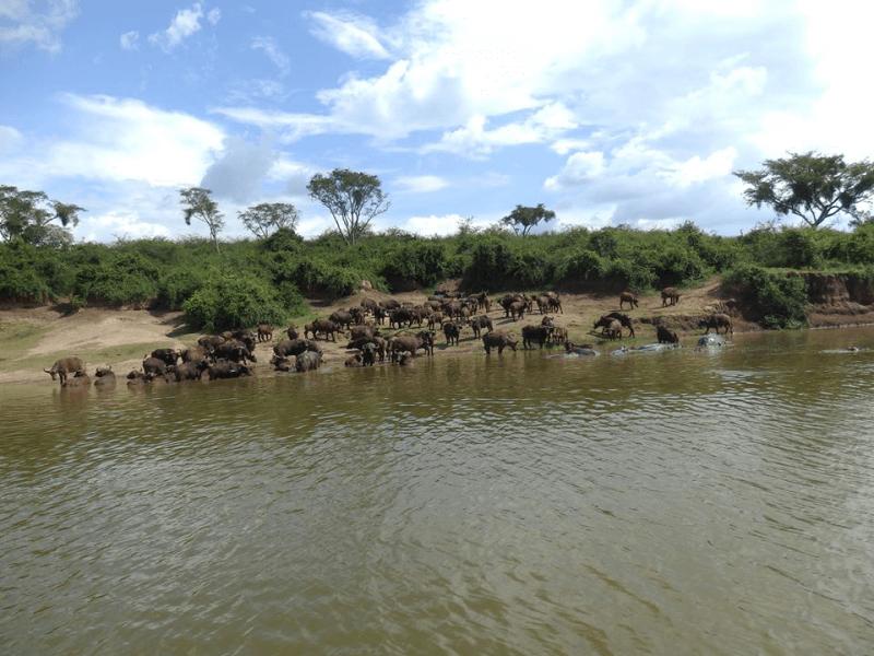Day 5 - Chimps trekking Kali