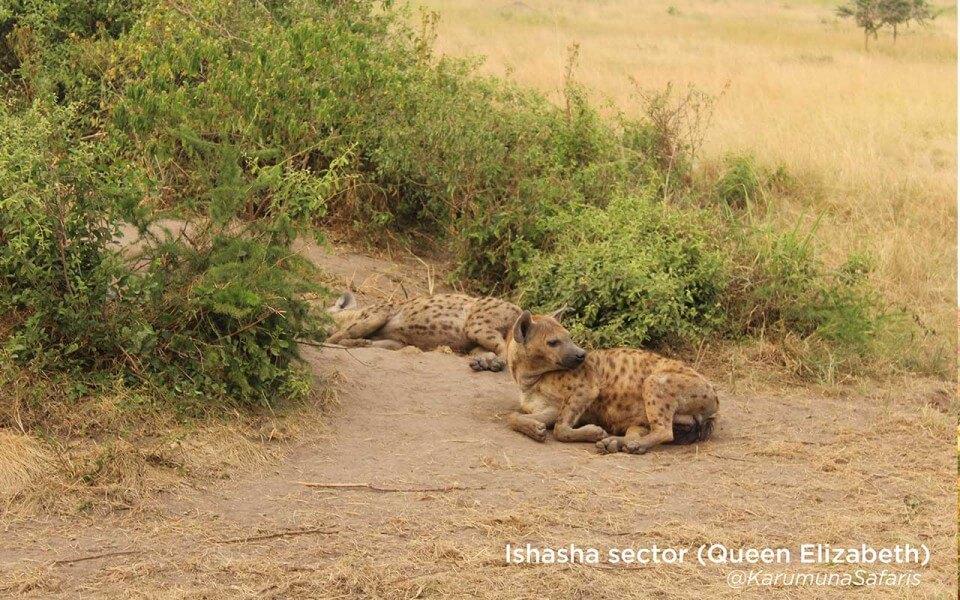 Primates in Uganda safari - 10 days