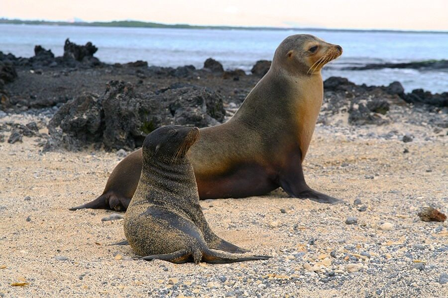 8 Days Galapagos Land Tour - Visiting 3 Islands