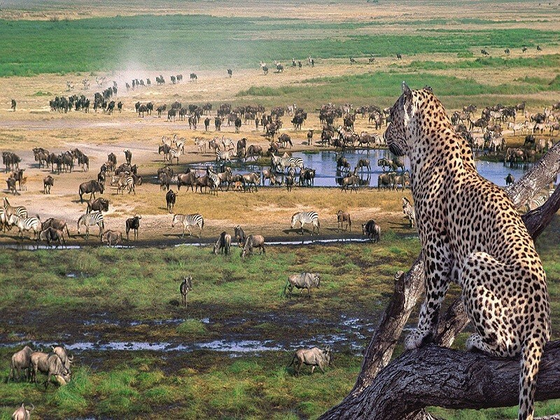 3 Days Safari to Serengeti National Park and Ngorongoro Crater