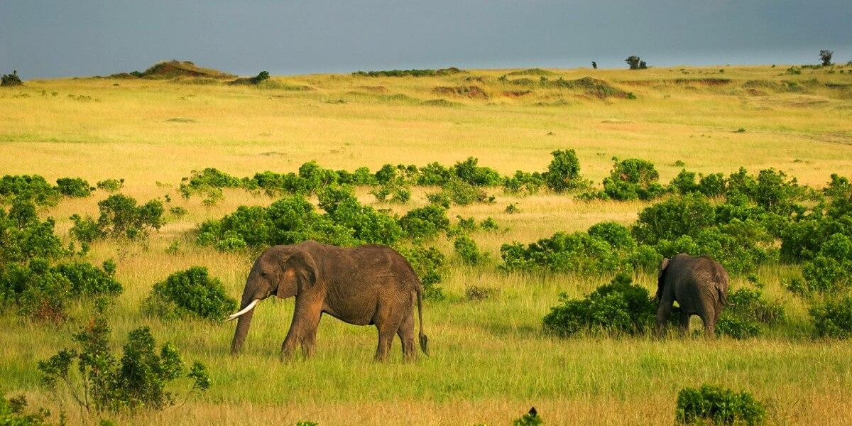 4 Days Maasai Mara Nakuru Safari