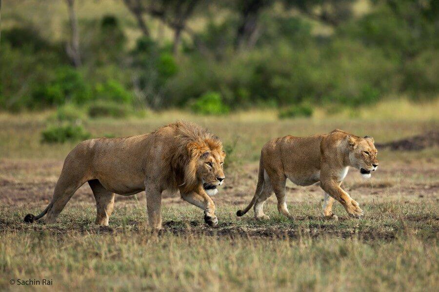 5 Days Aberdares, Lake Nakuru and Masai Mara Safari