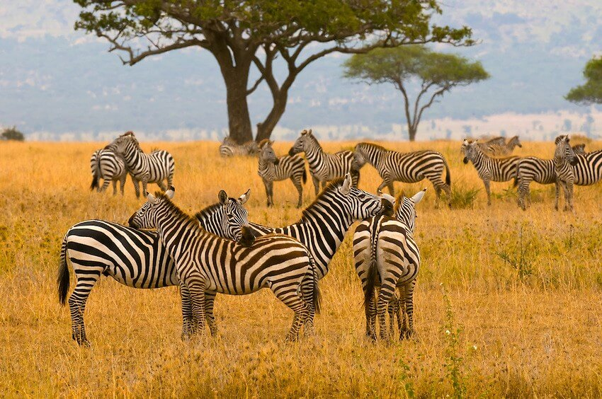 8-day Safari, Walking Safari & Culture Tour