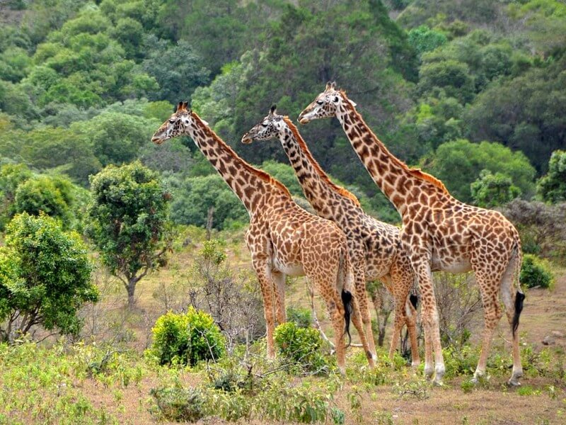 7 Days Samburu, Aberdare, Lake Nakuru and Masai Mara Tour