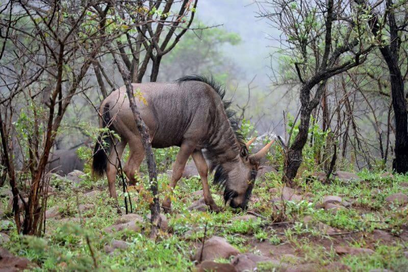 5 Day Safari Inside the Kruger Park