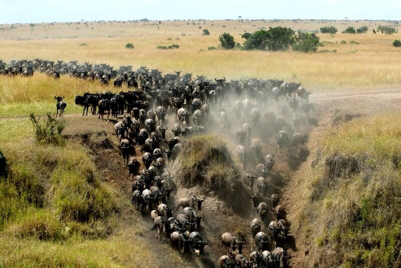 Full Day  Game  drive  in  Masai  Mara