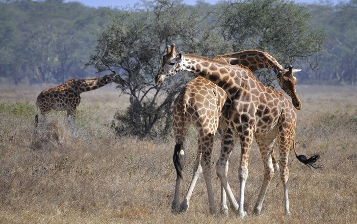 Best of  3 Days  Budget private  Maasai Mara  Safari