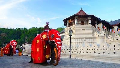 Sri Lanka's Temples & Culture Tour