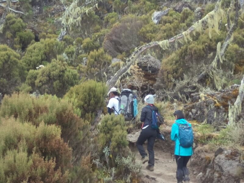 Mount Kilimanjaro Climbing via Machame Route 8 Days